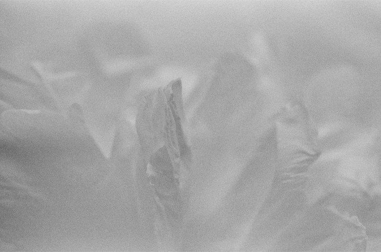 peonies_film_photo-003