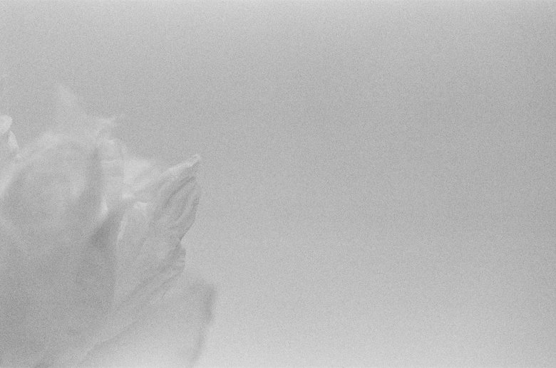 peonies_film_photo-004