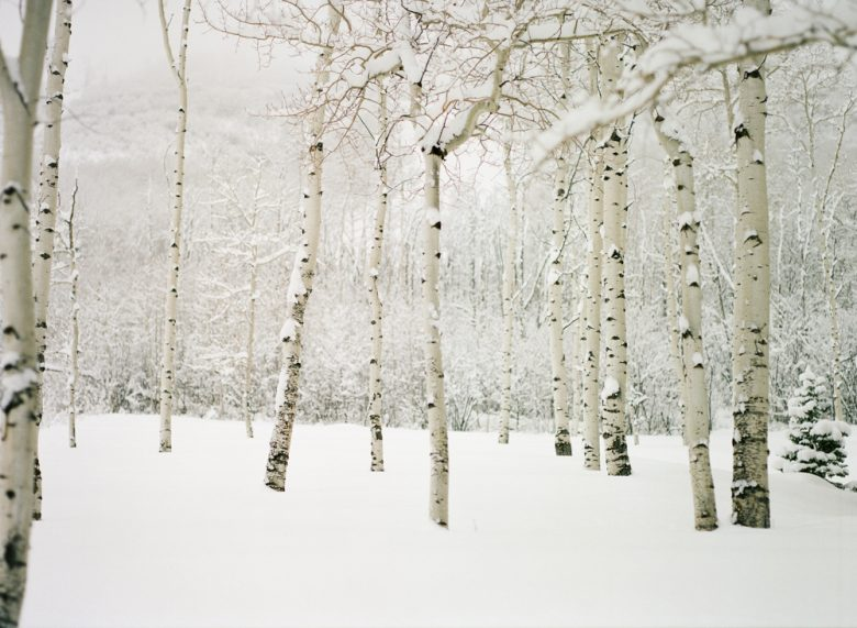 how to use the zone system by Ansel Adams : snow scene with birch trees