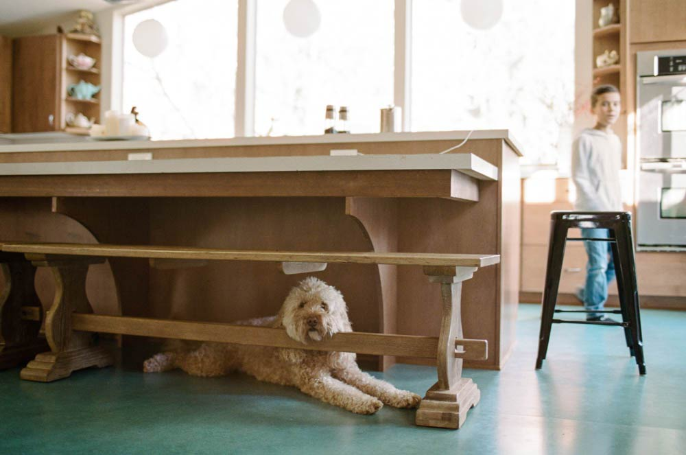 Seattle in home family photography : dog looking at camera while under table
