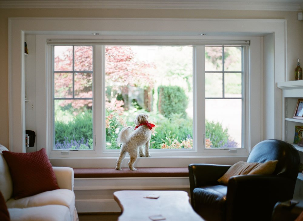 family photographers seattle : dog staring out window